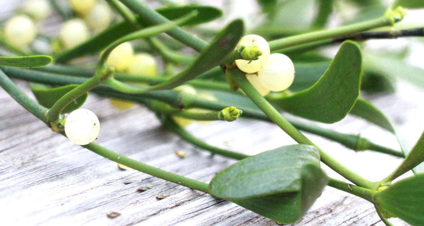 Mistletoe can be a cinch to hang for your holiday party.